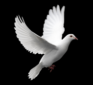 Solidarity with the Victims and for Peace-SOVIP
